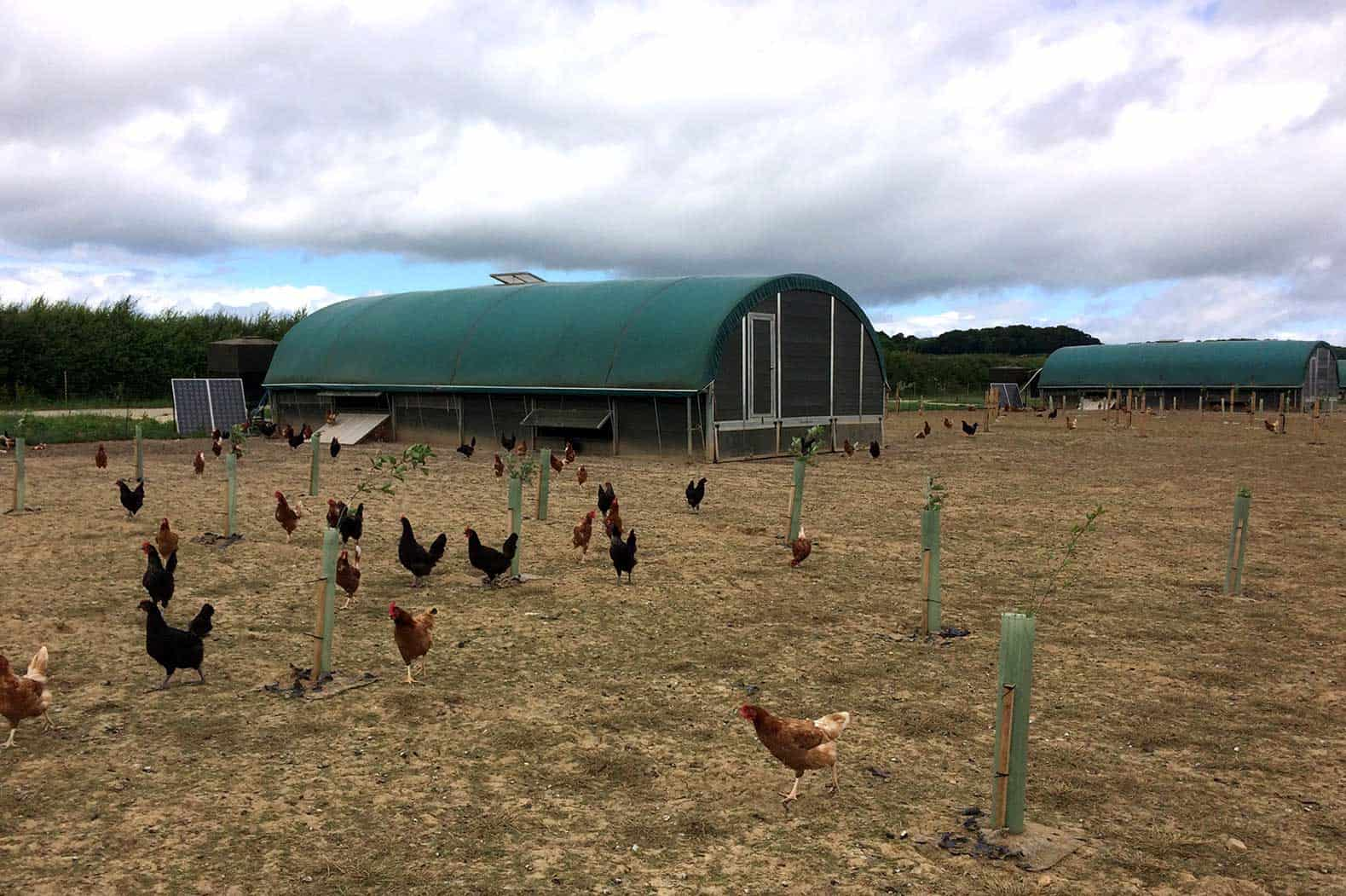 Daylesford Organics' free range Roam layer house - poultry chicken housing by McGregor Polytunnels