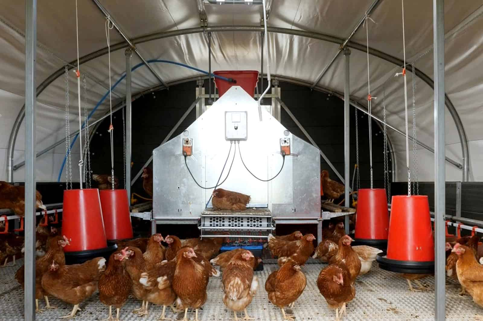 Mobile Chicken Layer House - Free Range and Organic Chicken Shelter - Agile 4250 Poultry Building - McGregor Polytunnels