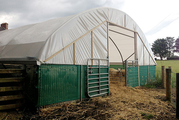 Lambing Shelter - Cheviot 9000 Sheep Housing building designed and manufactured by McGregor Polytunnels