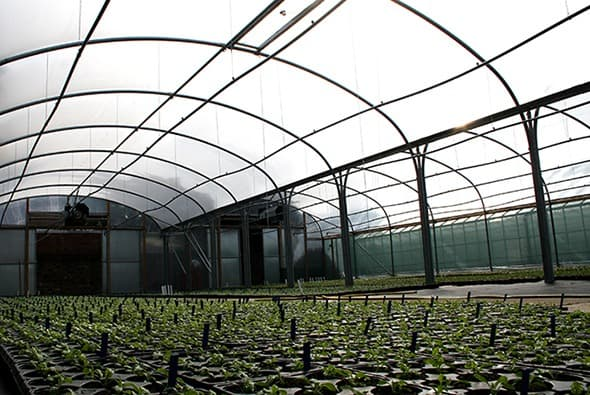 Horticultural building - polytunnel commercial structure designed by McGregor Polytunnels